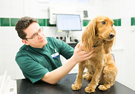 A dog having a diabetes check up