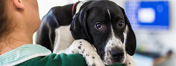 Dog consultation for bladder infection