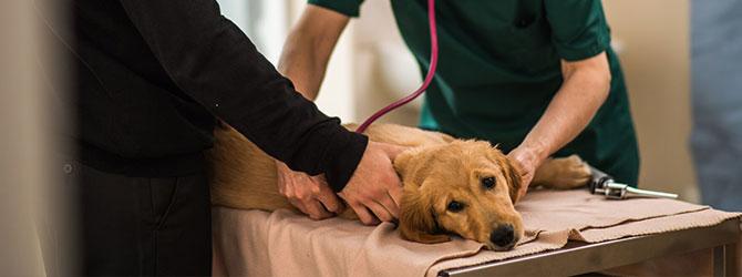 dog having a veterinary check up