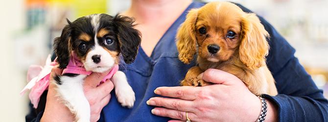 Puppy socialisation