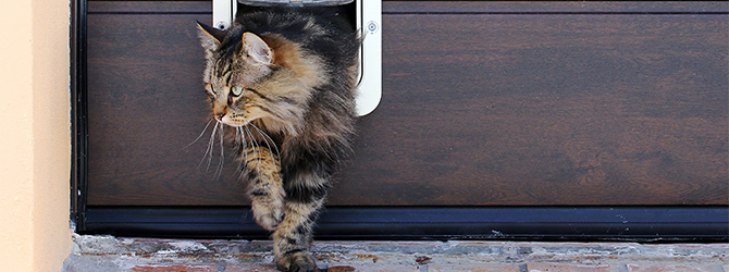 7 steps to letting your cat out for the first time