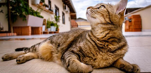 cat sunbathing on street