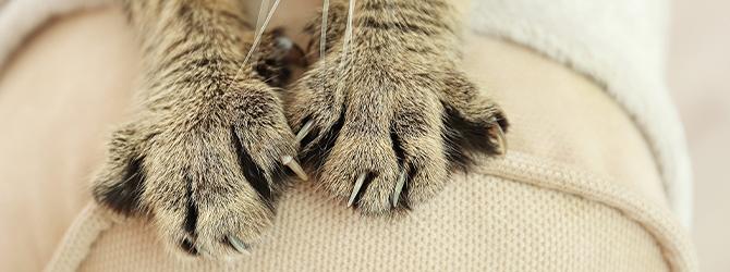 Cat scratch disease