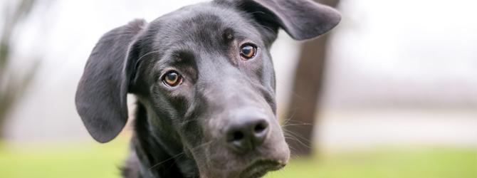 Confused black dog