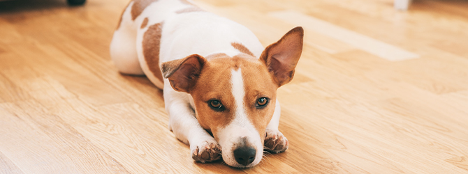 Gastroenteritis in dogs