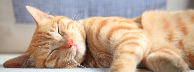 Happy Ginger Cat At Home