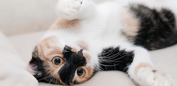 cat on back on indeterminate fabric floor