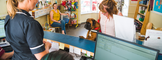 dog visiting vets to find our more about pet passports