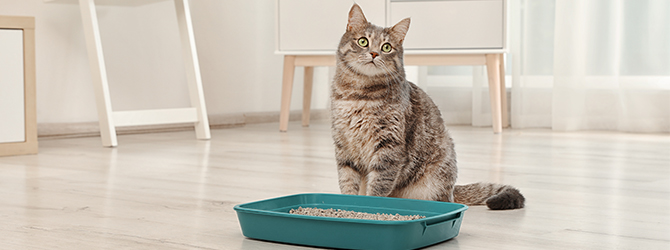 Not necessary cats peeing other than kitty litter box think, that