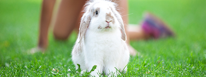 Myxomatosis in rabbits