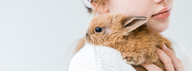rabbit with snuffles with owner