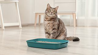 cat close to its litterbox