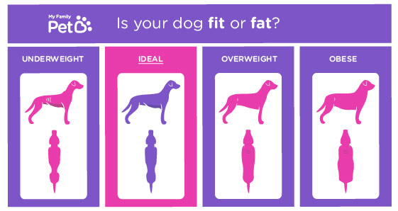 How Much Should My Dog Weigh? - My Family Pet