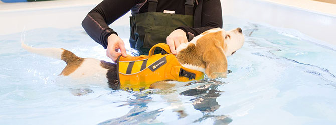 A dog having a hydrotherapy session
