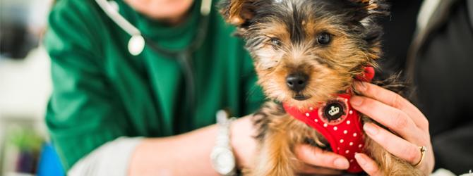 dog having veterinary check up