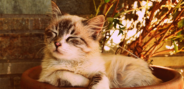 cat asleep outside