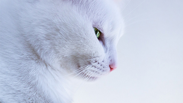 white cat looking down
