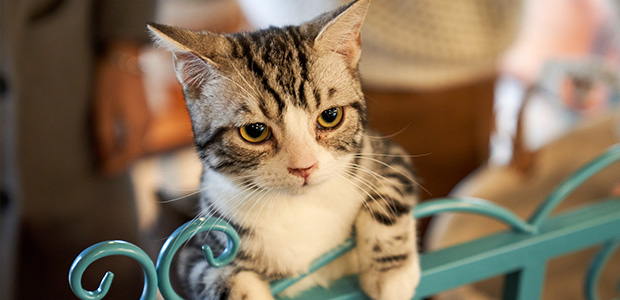 cat leaning on bed post